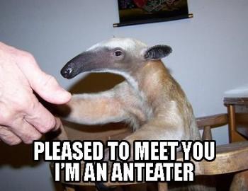 Polite Anteater